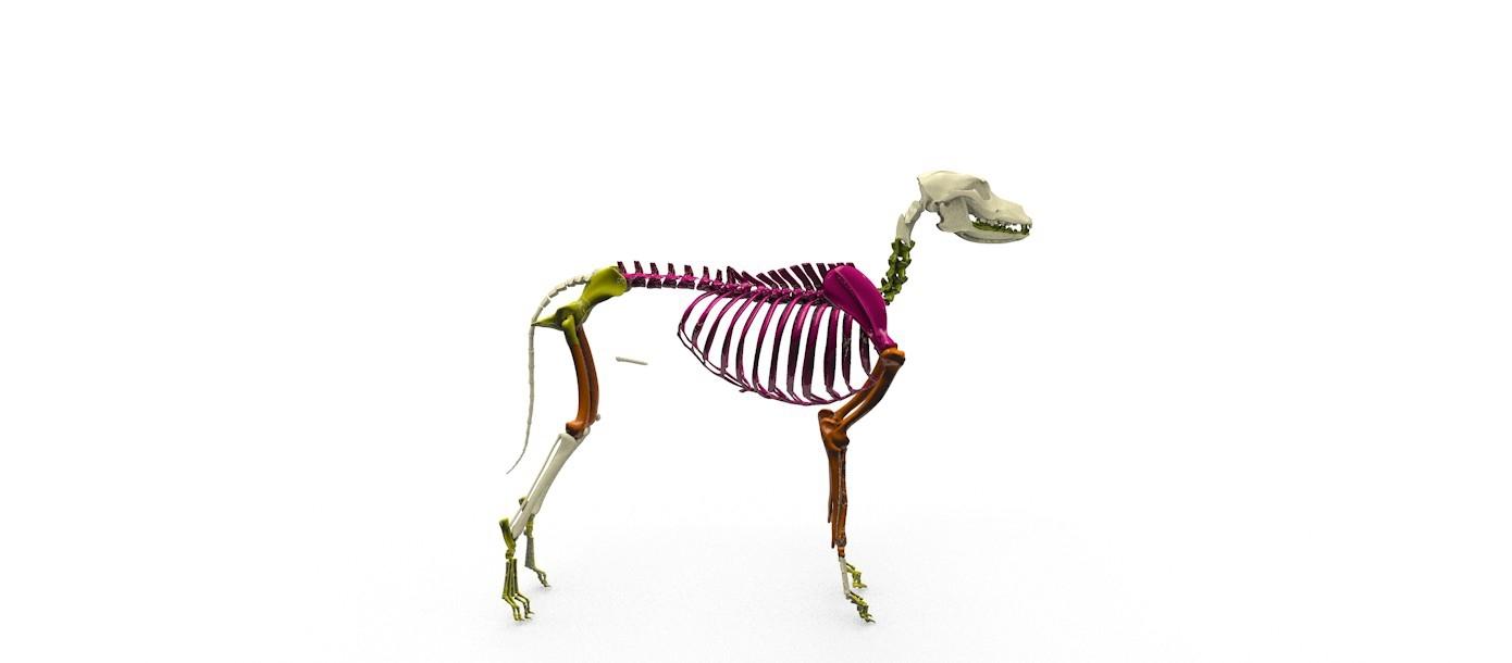Vi Skeleton Veterinary Instrumentation Ltd